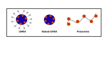 Rational Design of Universal Heparin Reversal Agent (UHRA) Makes it a Highly Specific Antidote to Heparins