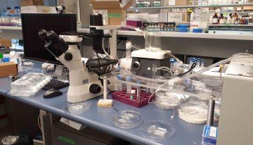 Meet the Researcher: Dr. Karen Cheung