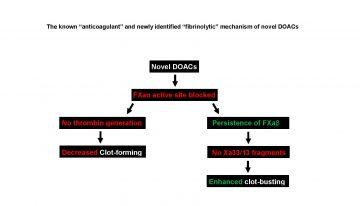 "New Anticoagulants Enhance ""Clot-busting"" Ability of the ""Clot-former"" Factor Xa"