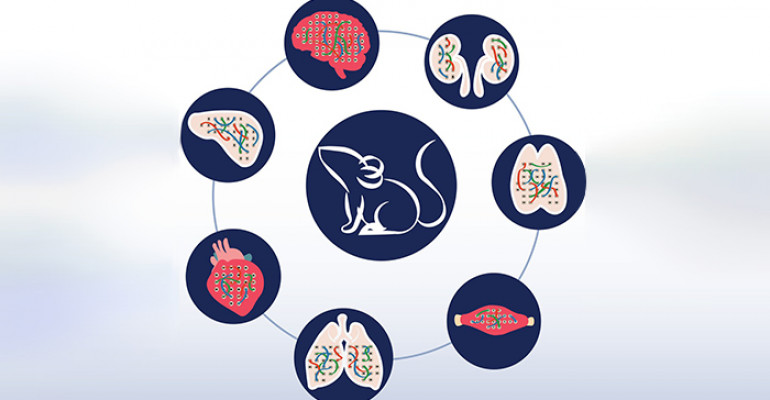 In illustrated style, a ring of circles with illustrated organs surrounding a circle in the middle with a mouse illustration. The circles in the outside ring have stylized drawings of organs like the lungs, the brain, and the heart.